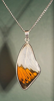 Great Orange Tip Solid silver framed pendant