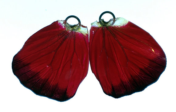 BFW0042 Natural Butterfly WIng Earrings