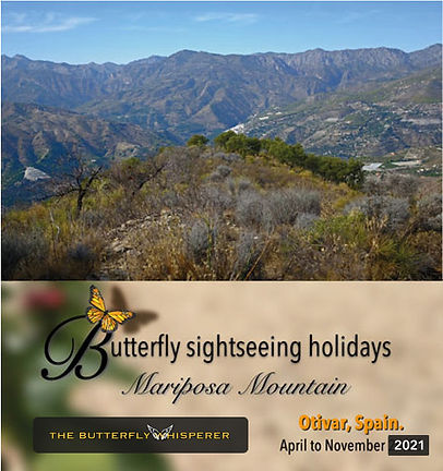 butterfly-sightseeing-holidays-with-the-
