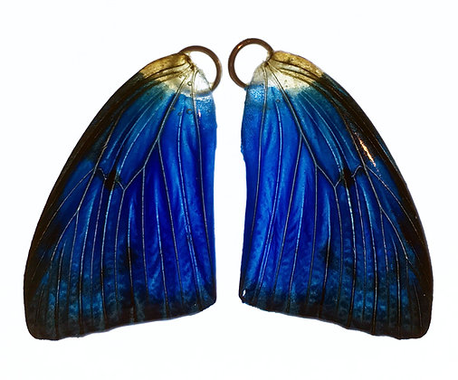 BFW0049 Natural Butterfly WIng Earrings