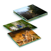 Square-Glass-Coasters-small-butterfly.jpg