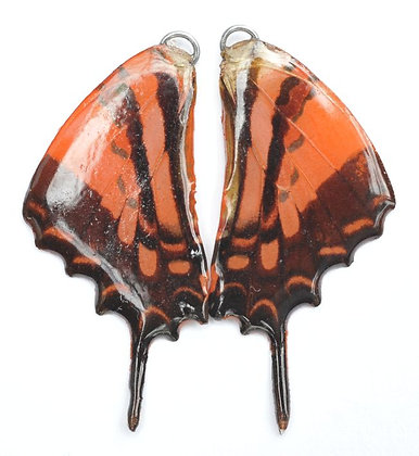 BFW0006 Natural Butterfly WIng Earrings