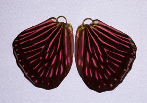 BFW0066 Natural Butterfly Wing Earrings
