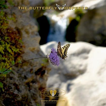 The waterfall butterfly art print
