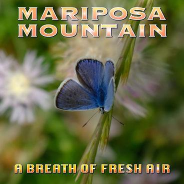 mariposa-mountain-blue-adonis.jpg