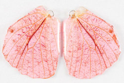 BFW0044 Natural Butterfly WIng Earrings