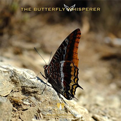 The other side of fear butterfly art print