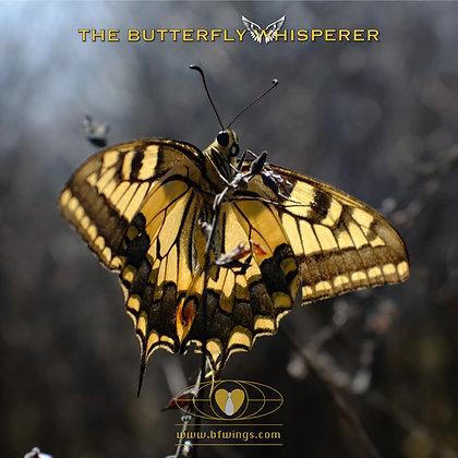 The prisoner butterfly art print