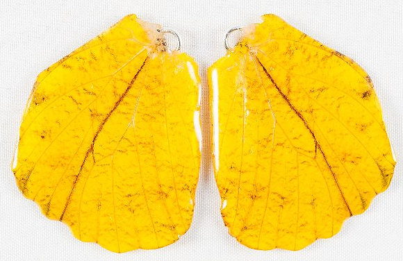 BFW0047 Natural Butterfly WIng Earrings