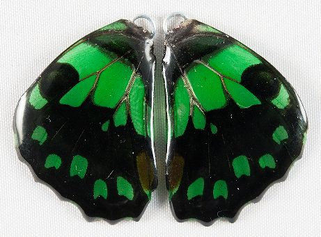 BFW010 Natural Butterfly WIng Earrings