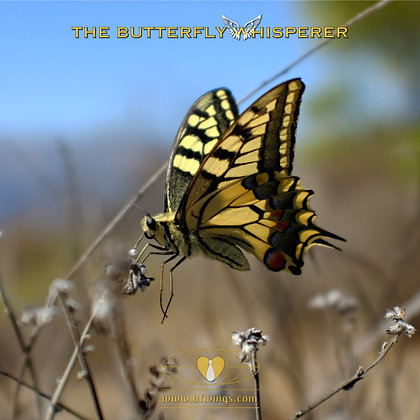 Bird in a cage  butterfly art print