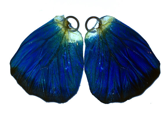 BFW0041 Natural Butterfly WIng Earrings