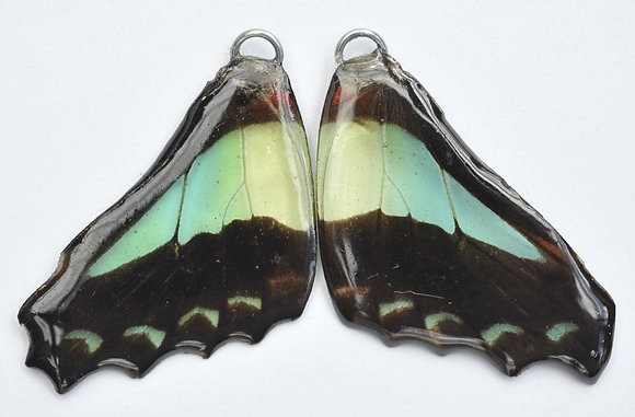 BFW0015 Natural Butterfly WIng Earrings