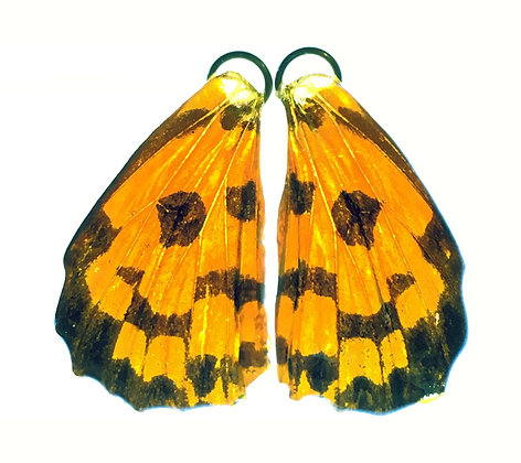 BFW0018 Natural Butterfly WIng Earrings