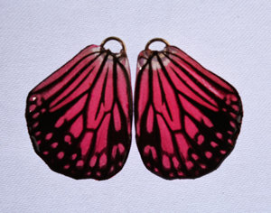 BFW0065 Natural Butterfly Wing Earrings