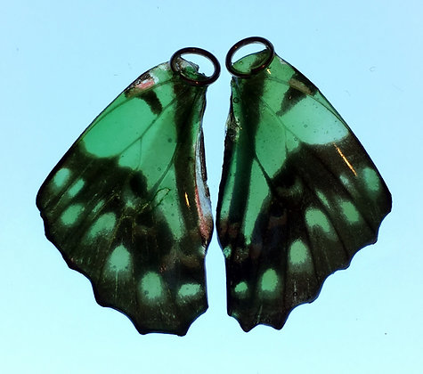 BFW0025 Natural Butterfly WIng Earrings