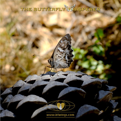 A journey of a thousand miles butterfly art print