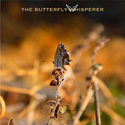 True wealth butterfly art print