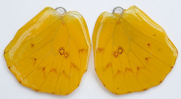 BFW0052 Natural Butterfly WIng Earrings