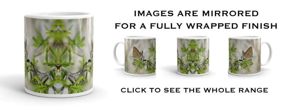 mirrored-images-of-mugs.jpg