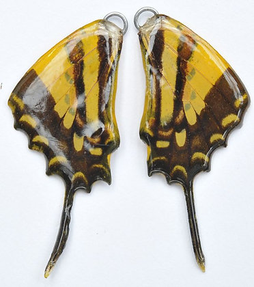 BFW0005 Natural Butterfly WIng Earrings