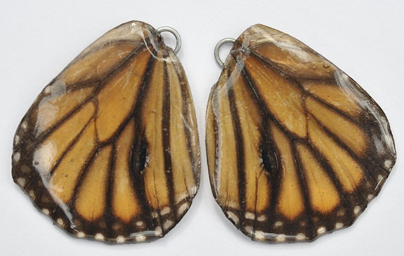 BFW0023 Natural Butterfly WIng Earrings