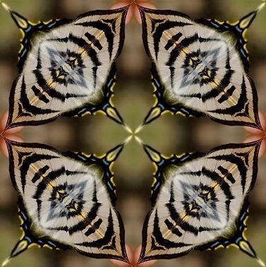 quadrant-butterfly-design.jpg