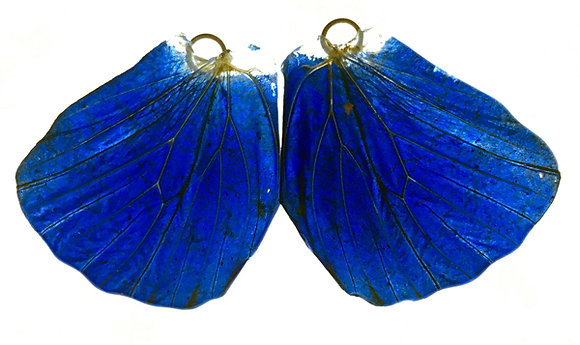 BFW0048 Natural Butterfly WIng Earrings