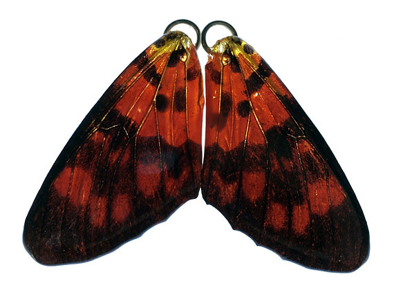 BFW0013 Natural Butterfly WIng Earrings