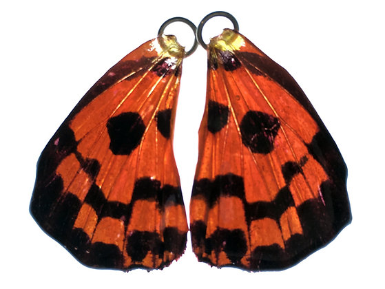 BFW0016 Natural Butterfly WIng Earrings
