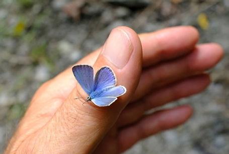 blue-belle.jpg