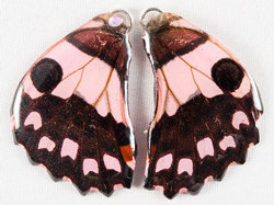 BFW0034 Natural Butterfly WIng Earrings