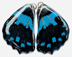 BFW0021 Natural Butterfly WIng Earrings