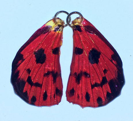 BFW0017 Natural Butterfly WIng Earrings
