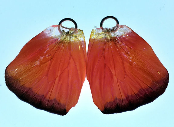 BFW0045 Natural Butterfly WIng Earrings