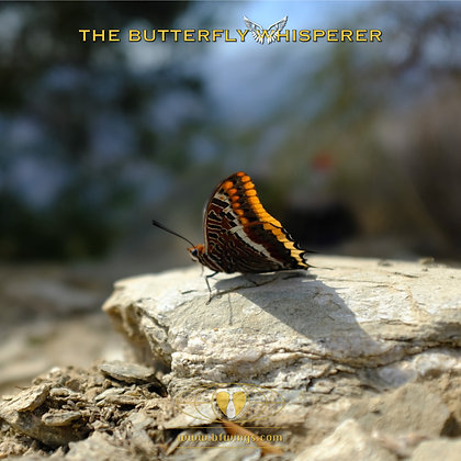 Rock of Ages butterfly art print