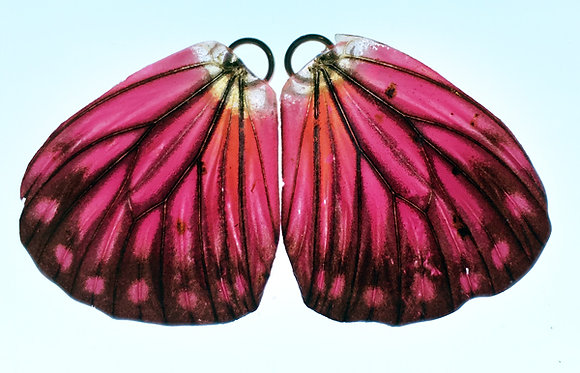 BFW0037 Natural Butterfly WIng Earrings