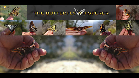 Butterfly whispering video featuring taun richards from bfwings