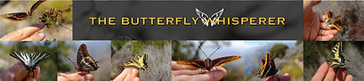 butterfly-whisperer-bfwings-taun-richard