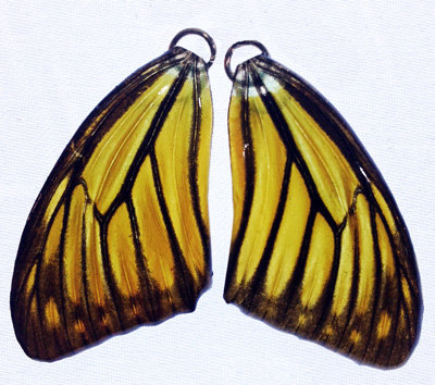 BFW0057 Natural Butterfly Wing Earrings