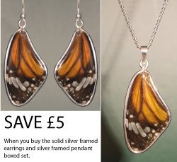 Tiger Solid silver earrings and pendant