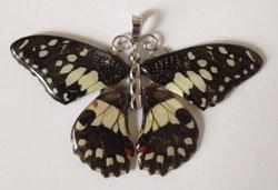 Full wing pendant