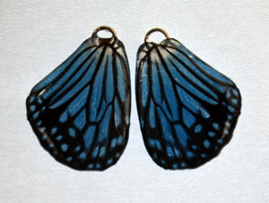 BFW0064 Natural Butterfly Wing Earrings