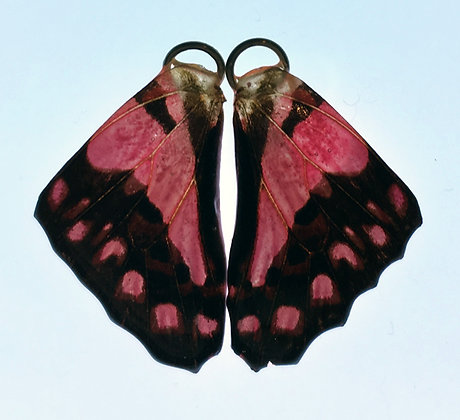 BFW0027 Natural Butterfly WIng Earrings