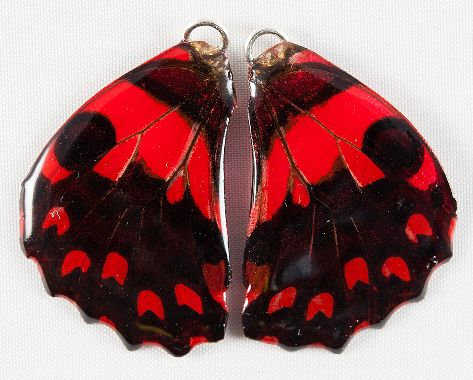 BFW0043 Natural Butterfly WIng Earrings