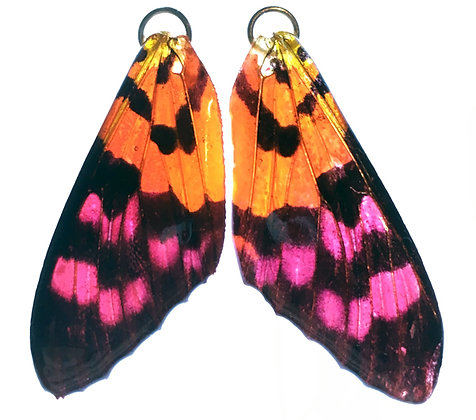 BFW008 Natural Butterfly wing earrings