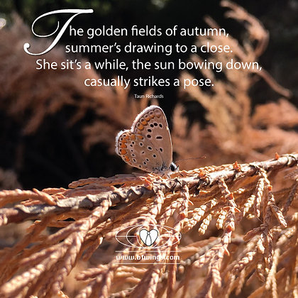 Golden fields of Autumn