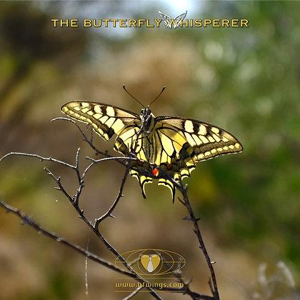 Bad company butterfly art print
