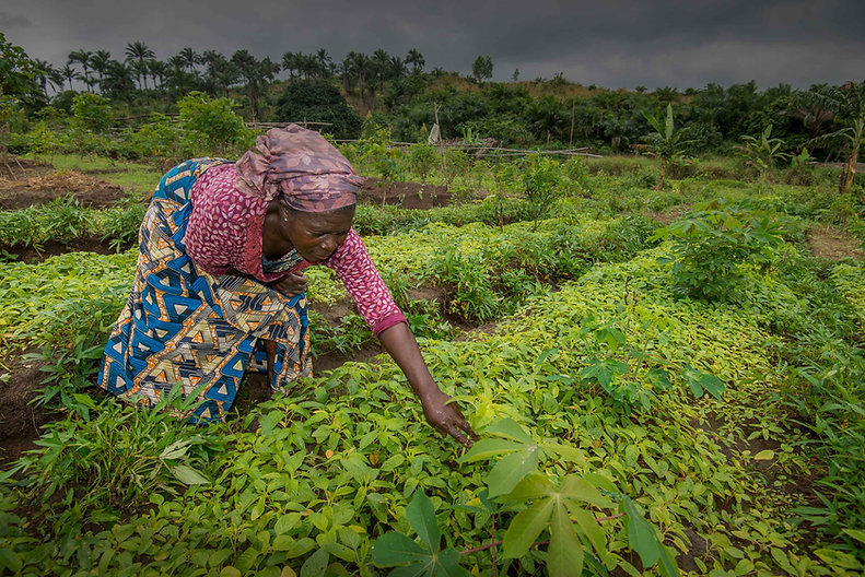 woman-in-congo-africa-checking-on-growin