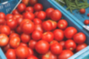 crate-of-farm-fresh-tomatoes-and-green-b